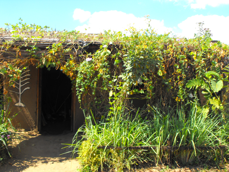 Malawi Sam's village kitchen with porch covered with lants too cool (submitted b