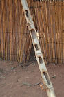 A bamboo pole is notched to allow chickens to walk up to the chicken coop Pasani village Malawi, malawi architecture