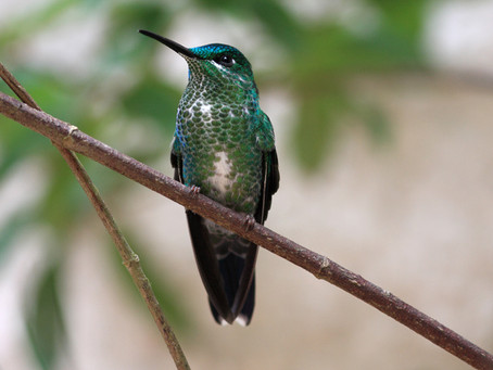 10 bird species you never knew