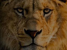 lion_edited_edited.jpg