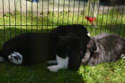 nasze króliki