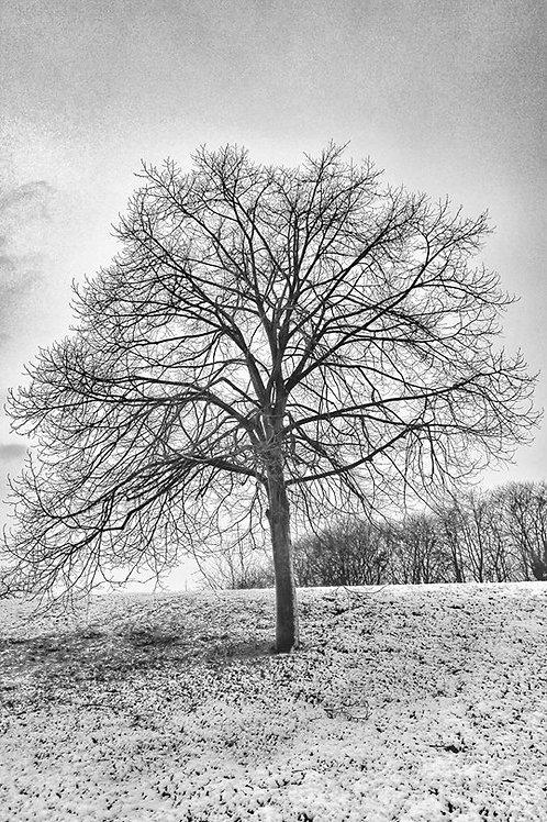 The Winter Tree - Winter 2017