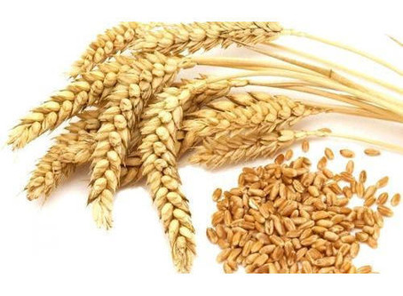 Organic non-GMO coming soon