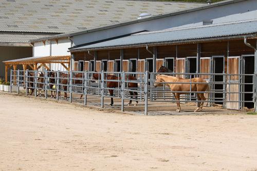 Horseacademy