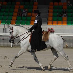 Uligàrio, Lusitano stallion