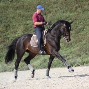 Lantiamo, Hanoverian stallion