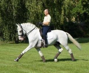 Xinês, Lusitano stallion