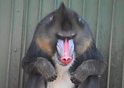 Mystic-Monkeys-Feathers-Animals-00034-40