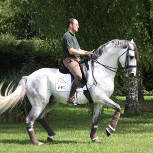 Urquito, Lusitano stallion