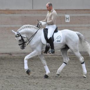 Xapim, Lusitano stallion