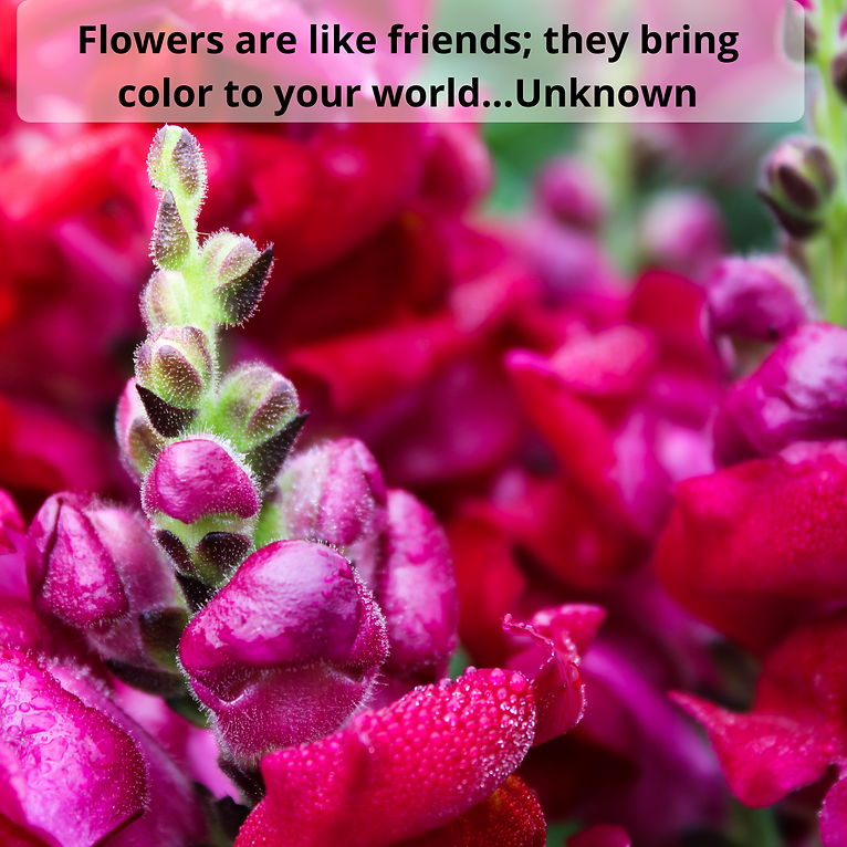 Flower quotes 101.png