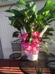 Plant with Silk Flowers 10