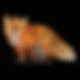 Nail loving Fox