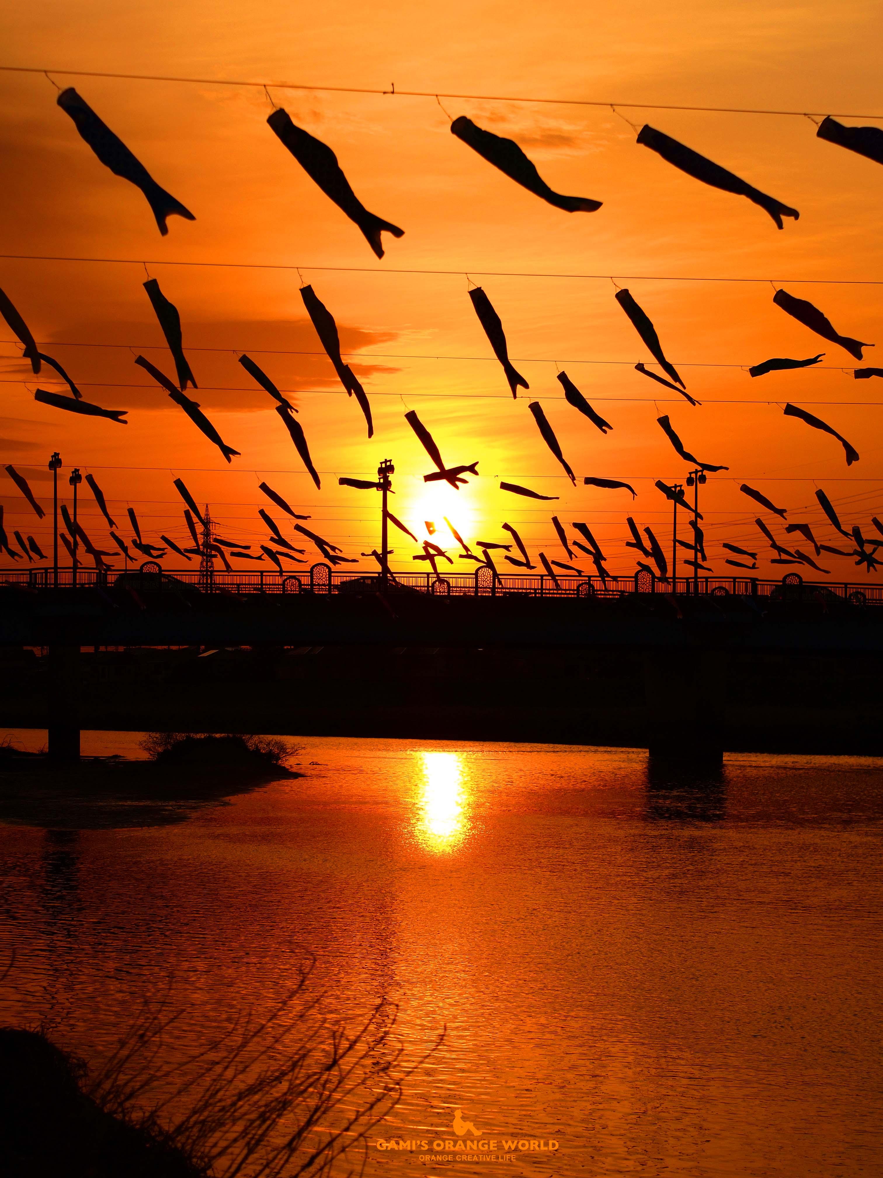 0586夕焼けを泳ぐ鯉のぼり縦3 のコピー