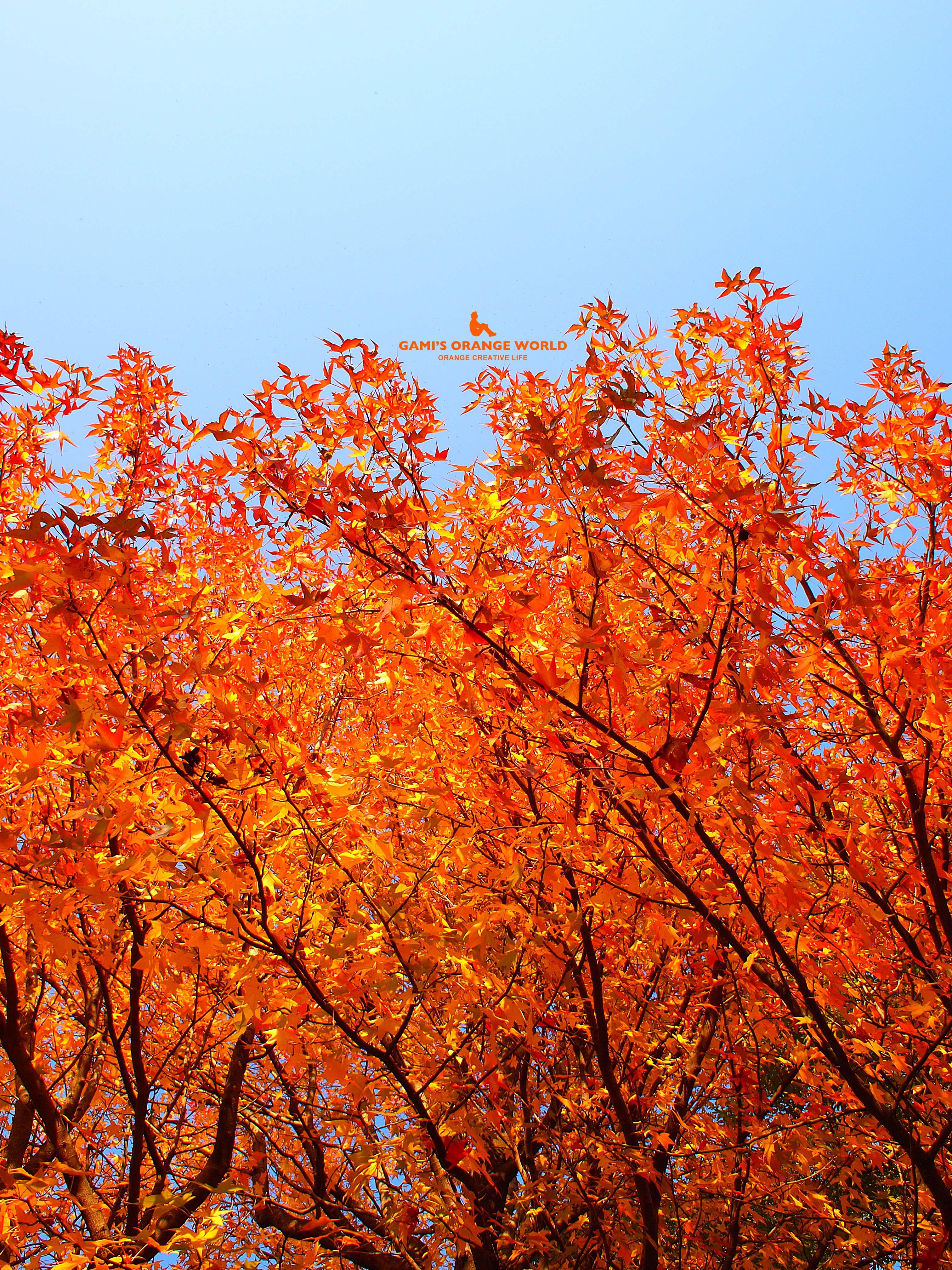 0135花田四丁目公園の紅葉6 のコピー