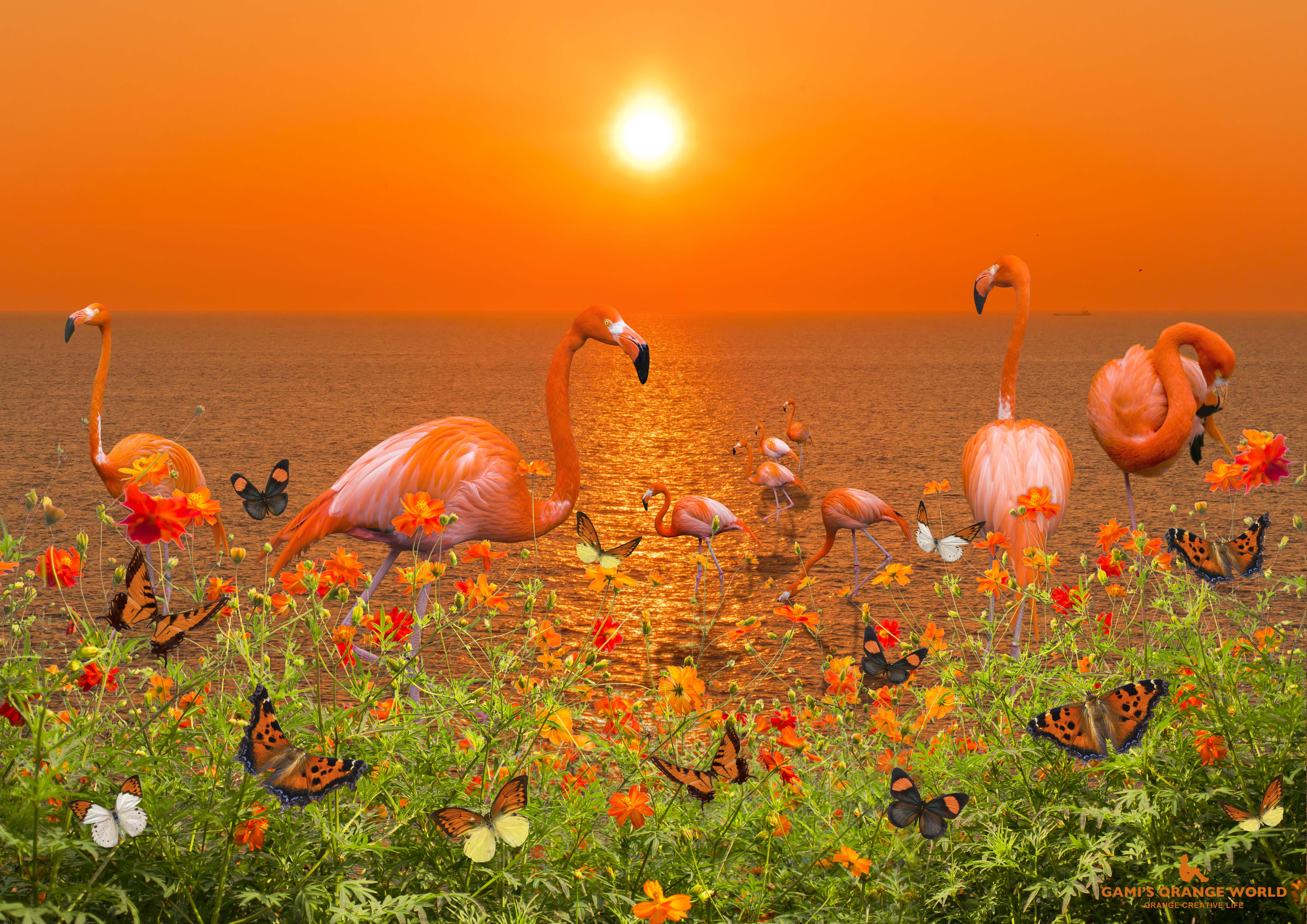 ORANGE PARADISE(オレンジの楽園)