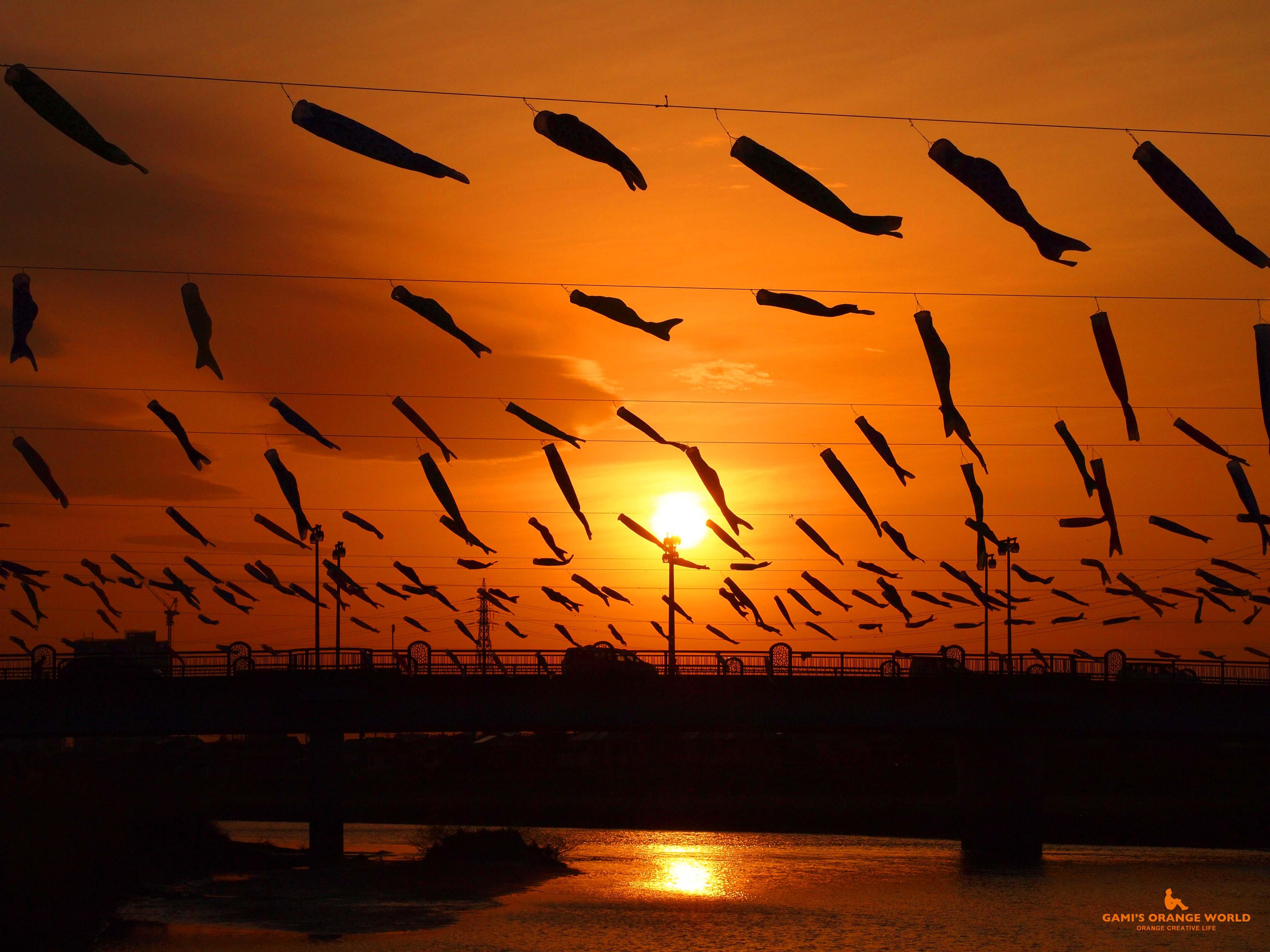 0586夕焼けを泳ぐ鯉のぼり横 のコピー