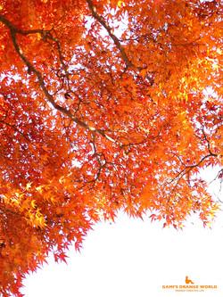0461花田苑の紅葉11 のコピー