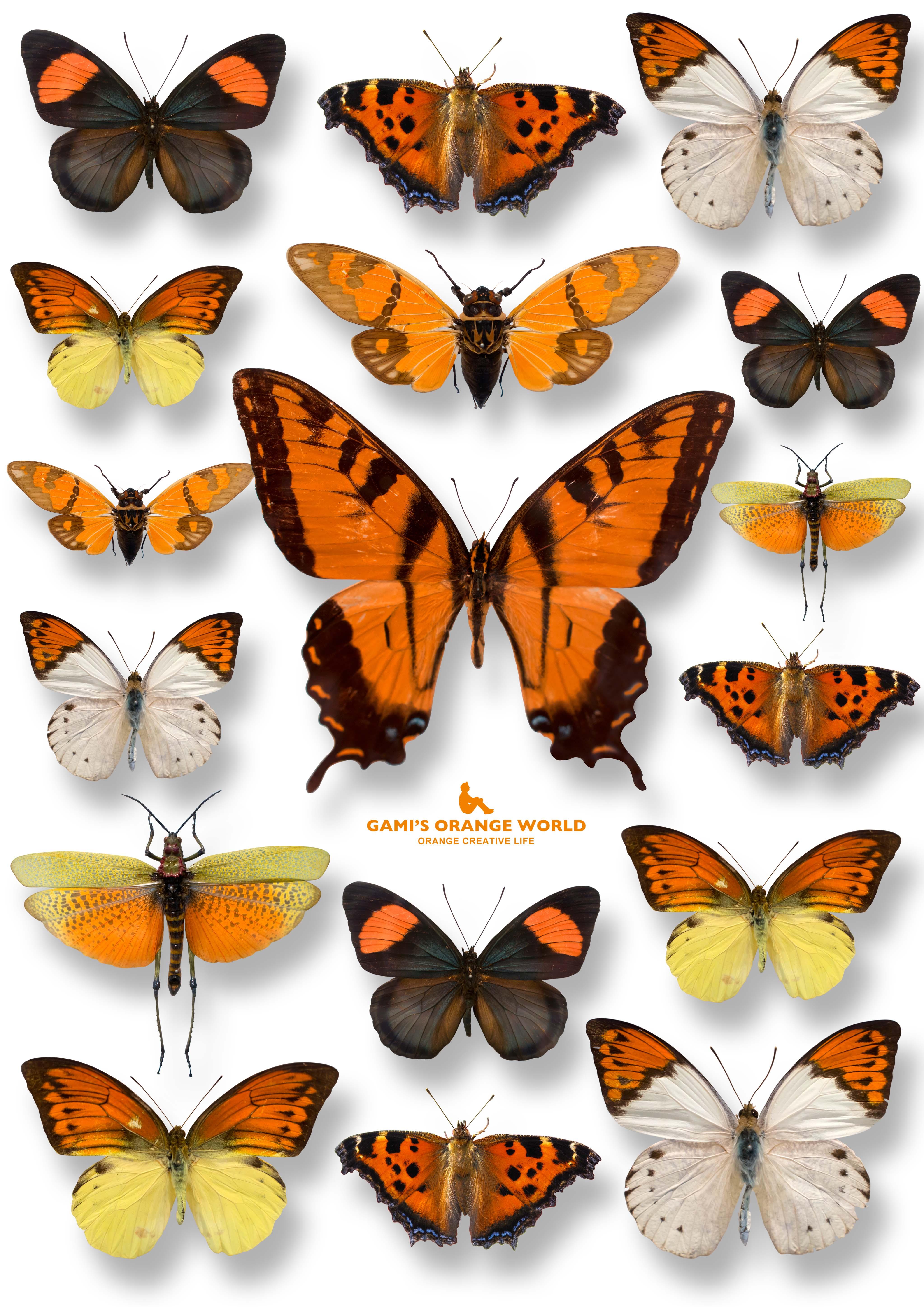 オレンジの羽集2 のコピー