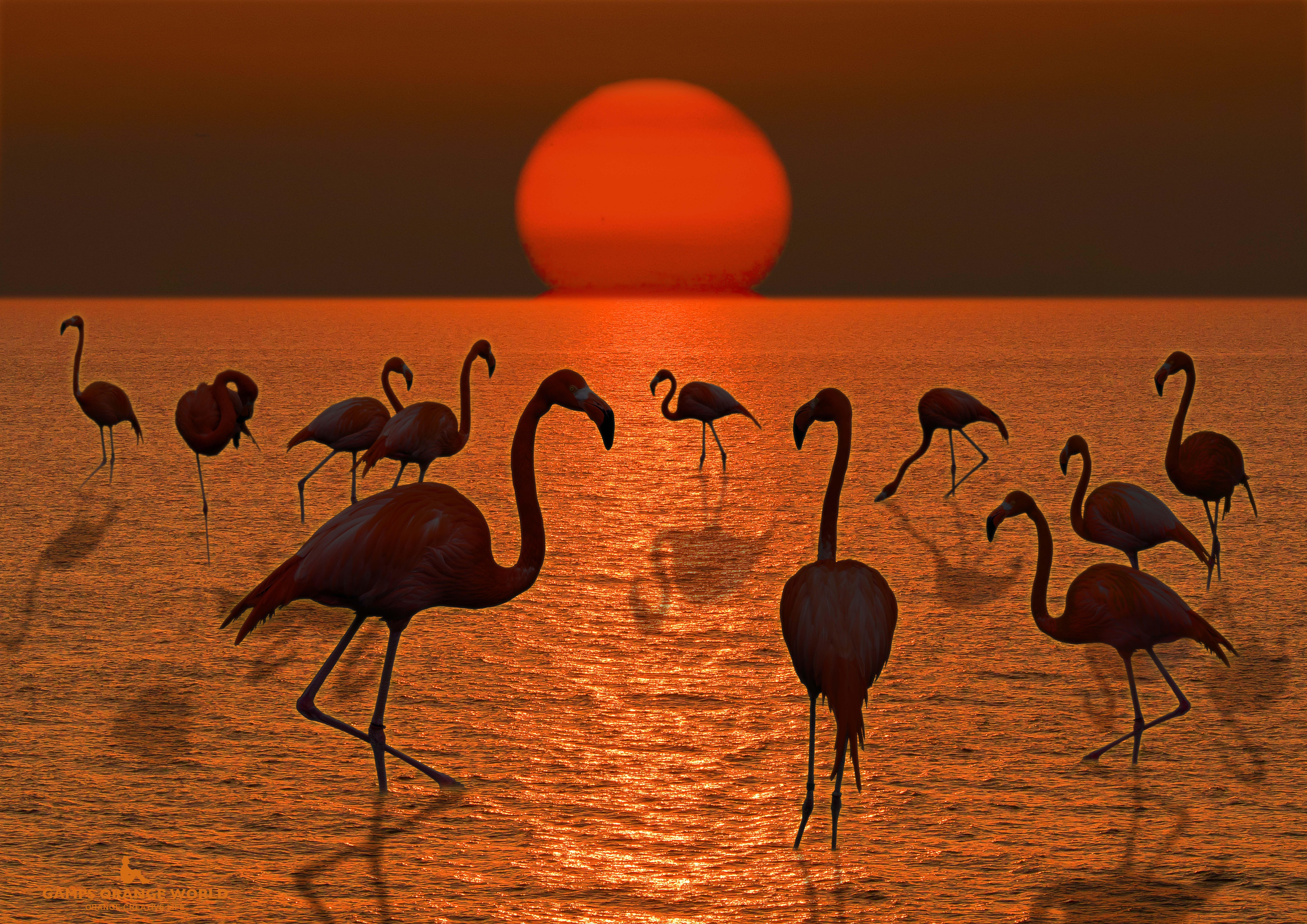 沈む夕陽とフラミンゴ