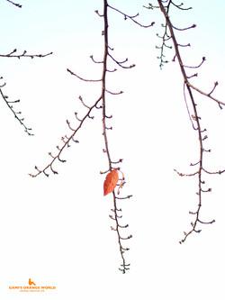 0458越谷の紅葉3 のコピー