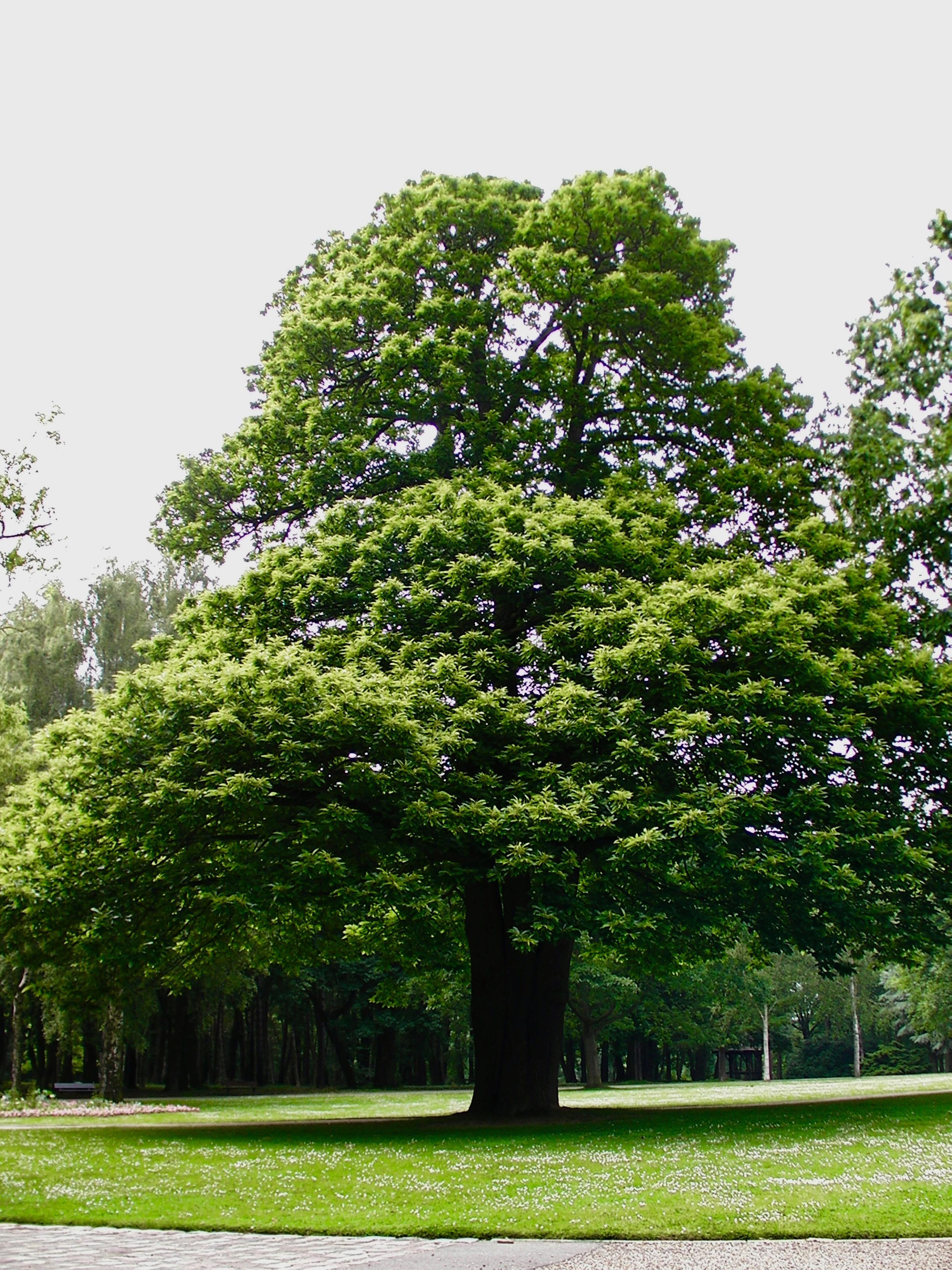 Le pied racine de l'arbre
