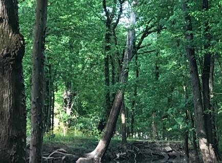 Creek side beauty
