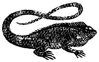 The Iguana Nashville restaurant