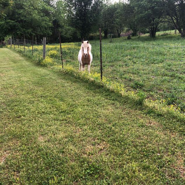 Pony Neighbor