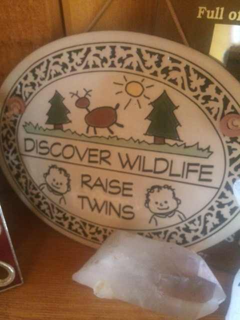 Discover Wildlife raise twins
