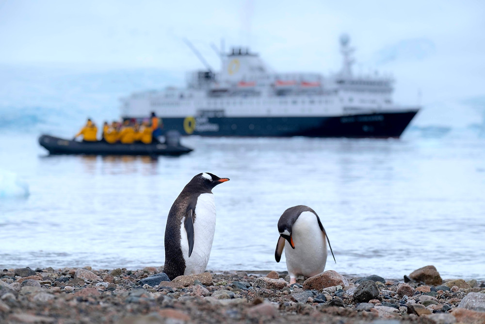 Antarctica penguins and a small cruise ship