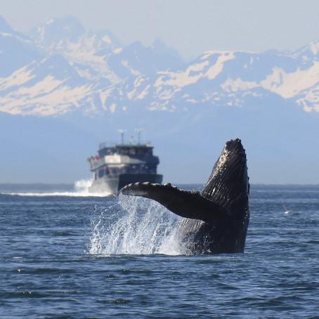 Bucket List Vacations - Cruising Alaska