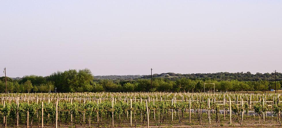 Pemberton Cellars Winery Vineyard