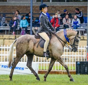 Don Giallo Perth Royal 2017