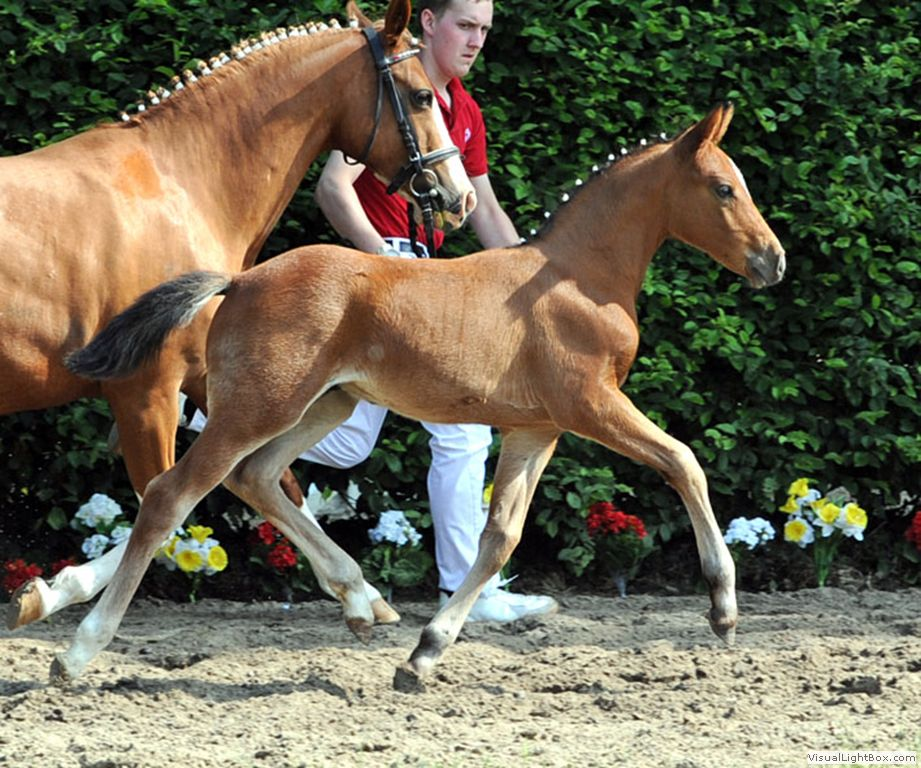 TDD foal out of Top Non Stop mare