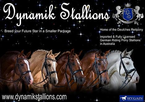 Dynamik Stallions Info Pack 2019.jpg