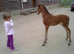 TDD foal Germany