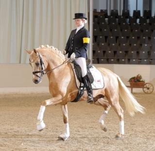 Stallion show Verden