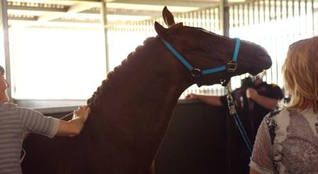 2014 od stables dp.jpg