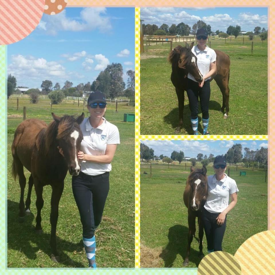 Colt foal x GR
