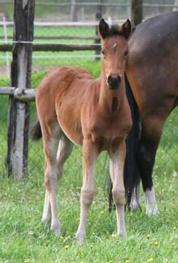 TDD foal Dunjeway J (Germany)