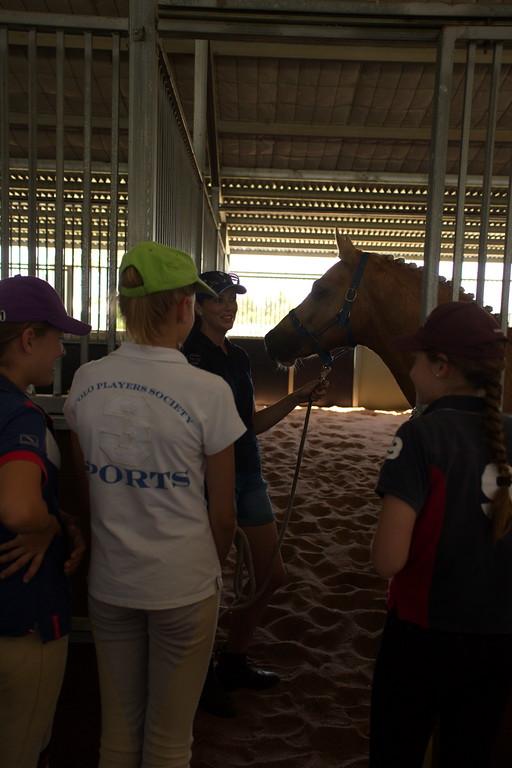 2014 od stables 1.jpg