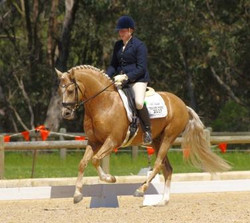 State Dressage Champs 2014