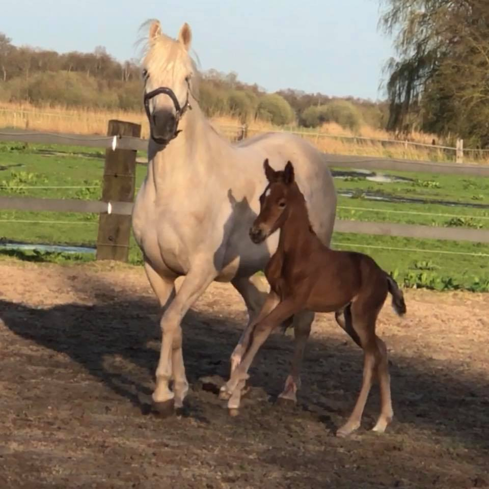 3 day old filly