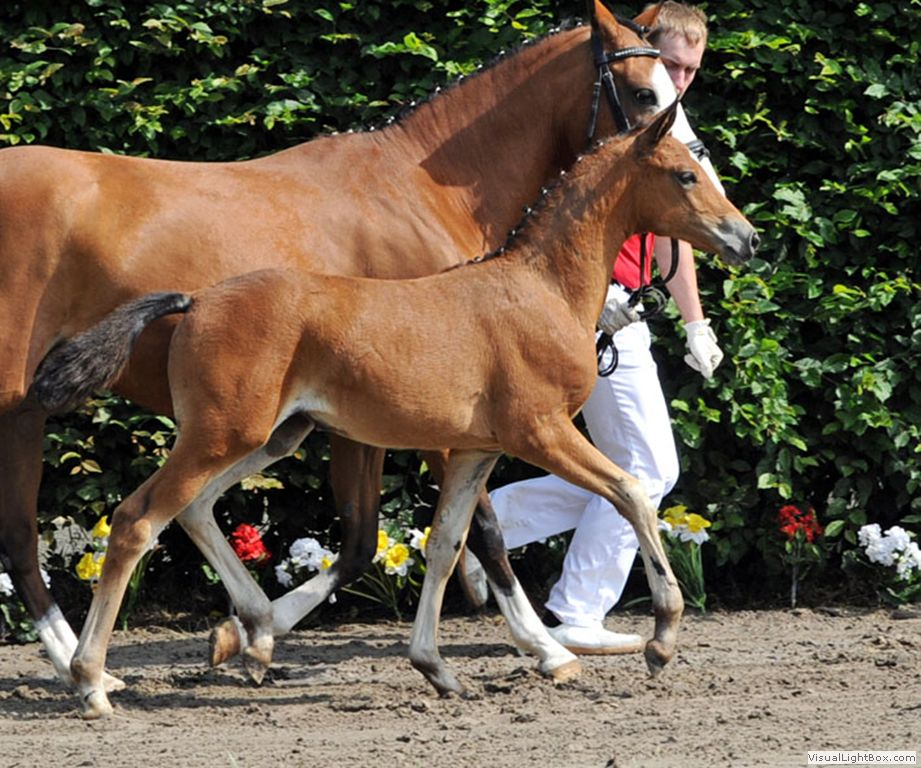 TDD foal out of Durello mare