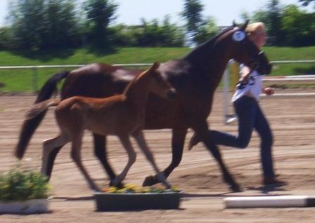 TDD foal (Germany)