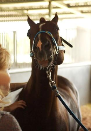 2014 od stables dp 2.jpg