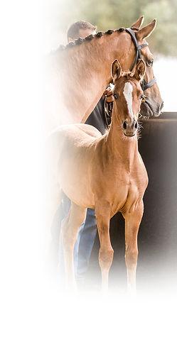 DS-Foals424 (2).jpg