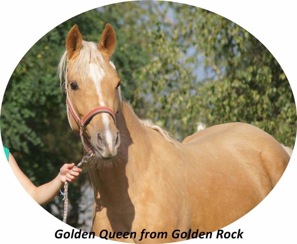 Golden Queen (Ger)