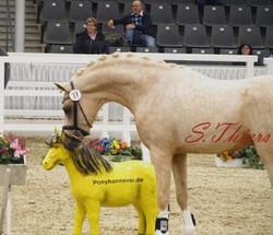 Golden Rock and his golden pony.jpg